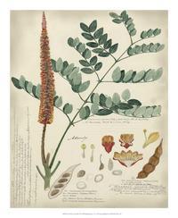 A Descubes - Botanical by Descube II