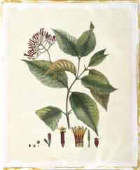 Hierseman - Crimson Botanical I