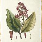 Hierseman - Crimson Botanical II