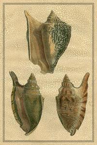 Diderot - Crackled Classic Shells II