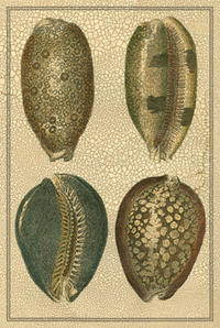 Diderot - Crackled Classic Shells IV