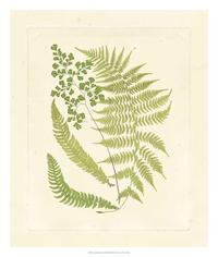 Vision Studio - Crackled Ferns II
