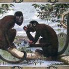 Pearson - Monkeys
