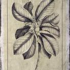 Buchoz - Embellished Antique Foliage II