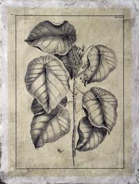 Buchoz - Embellished Antique Foliage IV