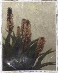 Chariklia Zarris - Pineapple Plant III