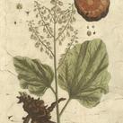 Blackwell - Vintage Foliage III