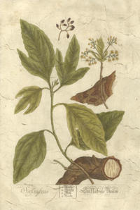 Blackwell - Vintage Foliage IV