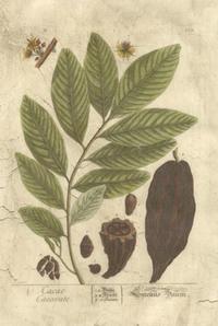 Blackwell - Vintage Foliage V