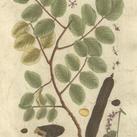 Blackwell - Vintage Foliage VI