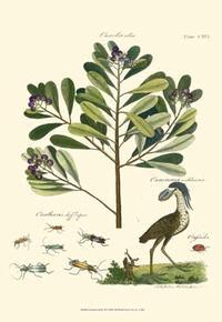 A Bell - Naturalist Study II