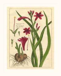 Unknown - Fleur De Rouge II