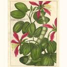 Unknown - Fleur De Rouge VI