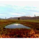 Danielle Harrington - Landscape I