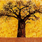 Babakar - baobab