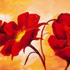 Gianola - Papaveri rossi
