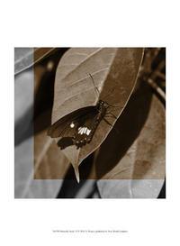 A. Project - Butterfly Study VI