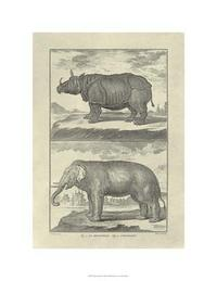 Denis Diderot - Elephant & Rhino