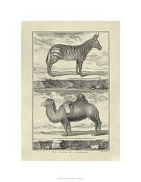 Denis Diderot - Zebra & Camel