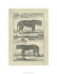Denis Diderot - Panther & Leopard