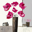 Bernard Ott - Pivoines roses I