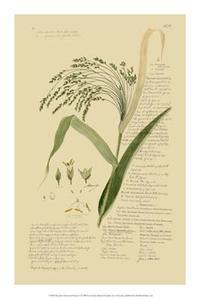 A Descubes - Descubes Ornamental Grasses V