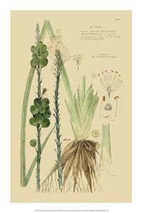 A Descubes - Descubes Ornamental Grasses VI