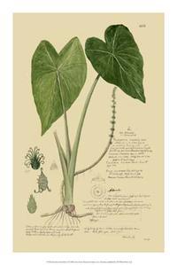 A Descubes - Descubes Aroid Plant I