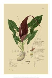 A Descubes - Descubes Aroid Plant IV
