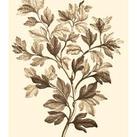Abraham Munting - Sepia Munting Foliage I