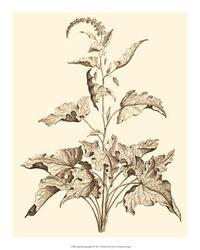 Abraham Munting - Sepia Munting Foliage II