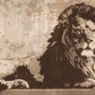 Andrew Cooper - Lion