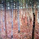 Gustav Klimt - Beechwood Forest, 1903