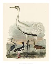 A. Wilson - Heron Family III