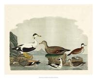 A. Wilson - Duck Family I