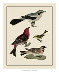 A. Lawson - Bird Family II