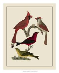 A. Lawson - Bird Family IV