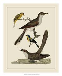 A. Lawson - Bird Family VI